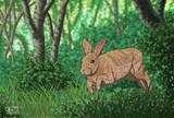 裏磐梯の森の中で駆け巡るノウサギ