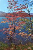 秋の訪れ(桧原湖)