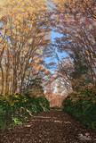 晩秋の野鳥の森