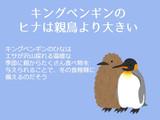 岡本数春とキングペンギンの豆知識