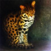 猫系動物の表情