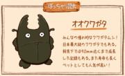 【ぽっちゃり昆虫図鑑】No.002「オオクワガタ」