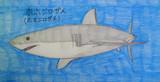 ホホジロザメ(ホオジロザメ)