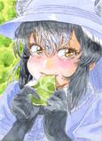 キャベツを食べるアライグマ