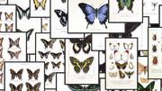 【MMD】昆虫標本セット