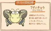 【ぽっちゃり昆虫図鑑】No.007「アゲハチョウ(ナミアゲハ)」