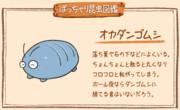 【ぽっちゃり昆虫図鑑】No.021「オカダンゴムシ」
