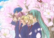 さくらのあめ 【桜舞祭】