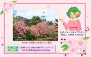 JR8DAGのAM & QRP ホームページの壁紙(桜2021)