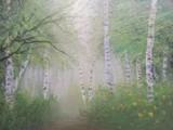 白樺の小道
