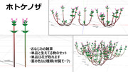 【MMD-OMF11】ホトケノザ