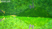 鏡面緑池 / KyoumenRyokuchi