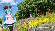 【ミクさんと】木曾三川公園138タワーパーク 花畑【愛知県】