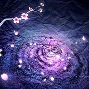花筏-夜桜-