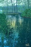 梅雨の曽原湖岬