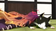 猫吸い白蓮