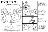 猿の体重を利用して生息域を拡大する植物を考えました