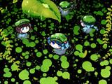 河童の寄る池のほとりで