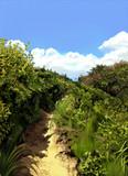 初夏の小路