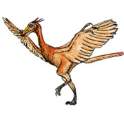 お絵カキコ・始祖鳥