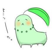 【落書き】チコリータ