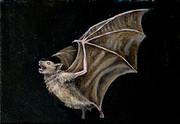 油絵でコウモリを描いてみた