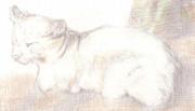 【色鉛筆画】吾輩は野良猫である