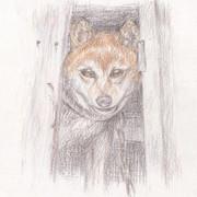【色鉛筆画】猛犬注意!(ただし柴犬)