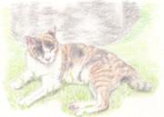 【色鉛筆画】ひなたぼっこ三毛猫
