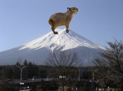 合成写真【カピバラ+富士山】