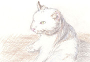 【色鉛筆画】猫……しつこいけどまた猫