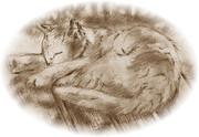 【鉛筆画】猫よ……そのベンチは人間用だ