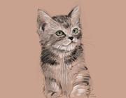 猫模写(30分)