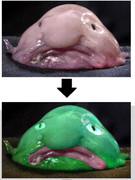 アンサーイラスト 深海魚