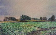 Field Ⅱ-大地の絨毯