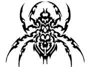 蜘蛛xトライバル