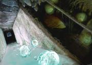 thawed dungeon dethawed