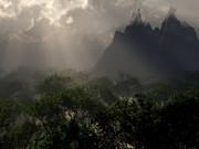 仙人の居る森林