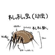 ワシャワシャ虫