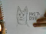 ドレミファロンド(犬