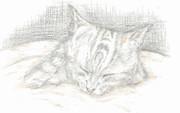 【色鉛筆画】仔犬を見に行ってきました……仔猫が可愛かったです