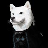 GANTZ犬