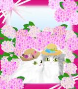 紫陽花デート