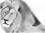途中まで真面目なライオン