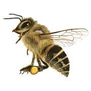 【昆虫】ニホンミツバチ