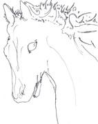 白く透明な馬