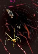 蜘蛛の糸・地獄変