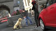 愛犬と愉しむカーライフ
