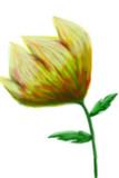 世界のB面(花)
