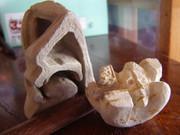 人体断面の彫刻(練習作品)